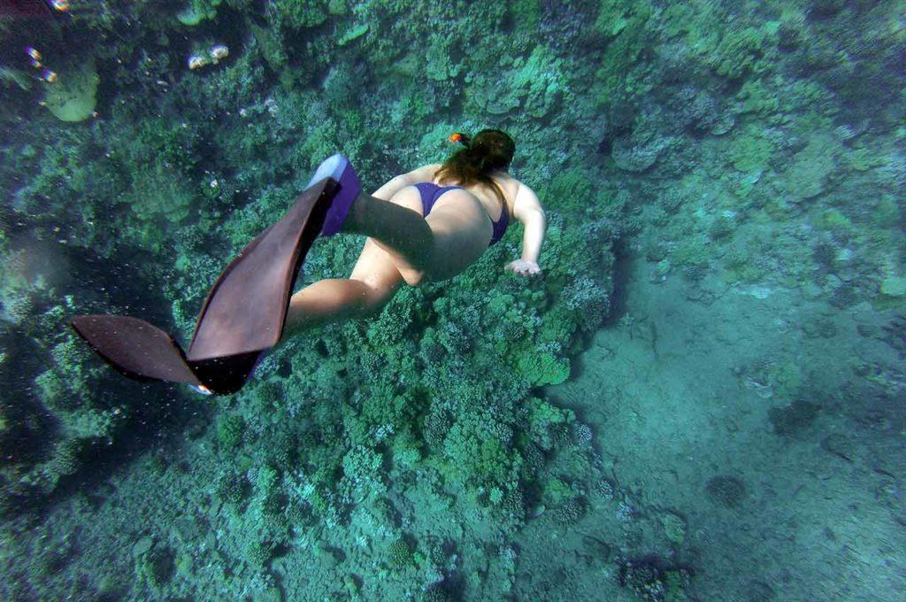 Snorkel en la Isla de Benidorm