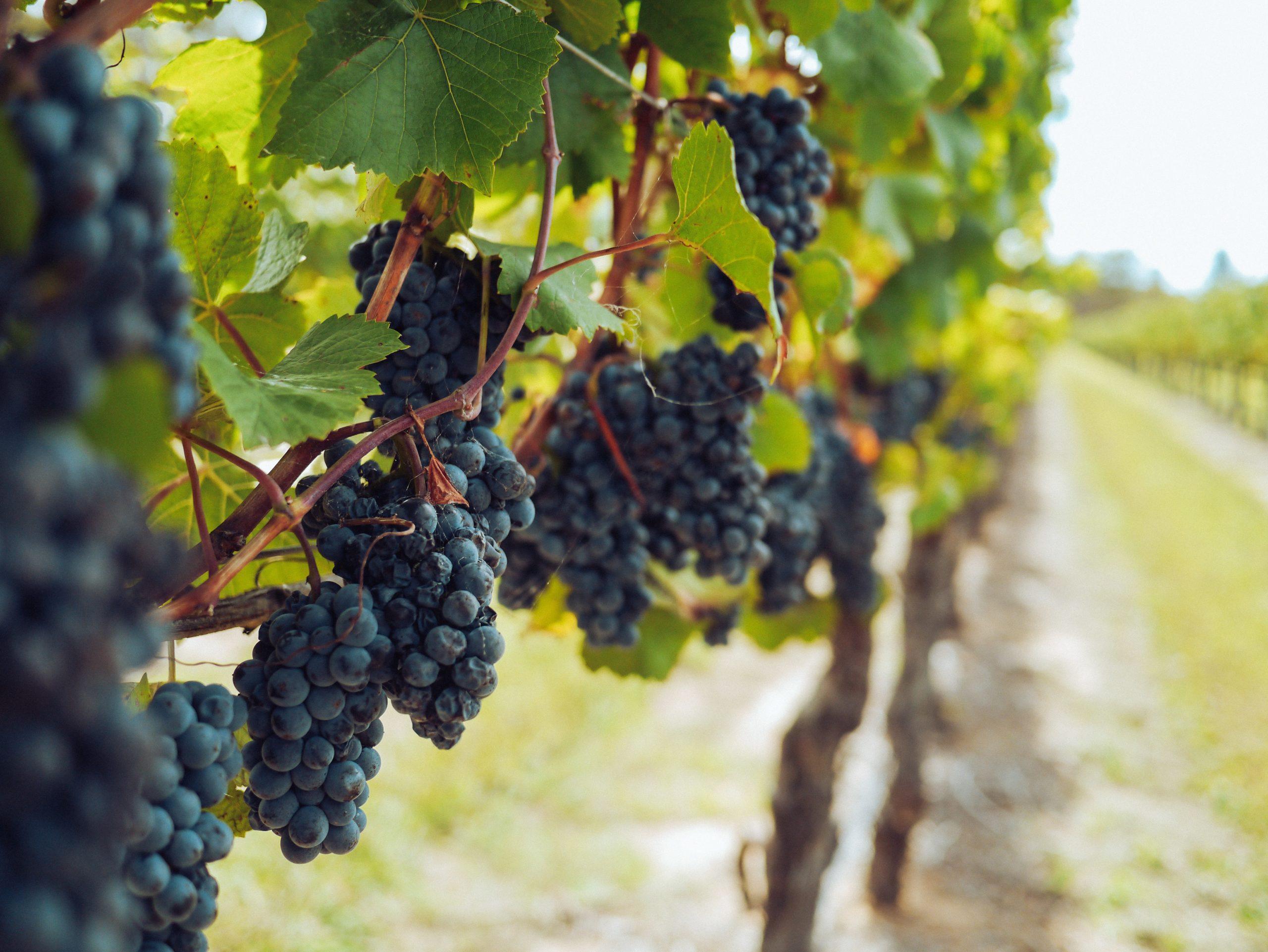 ruta del vino-camping Villasol2